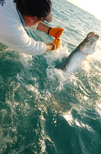 Islamorada Tarpon fishing