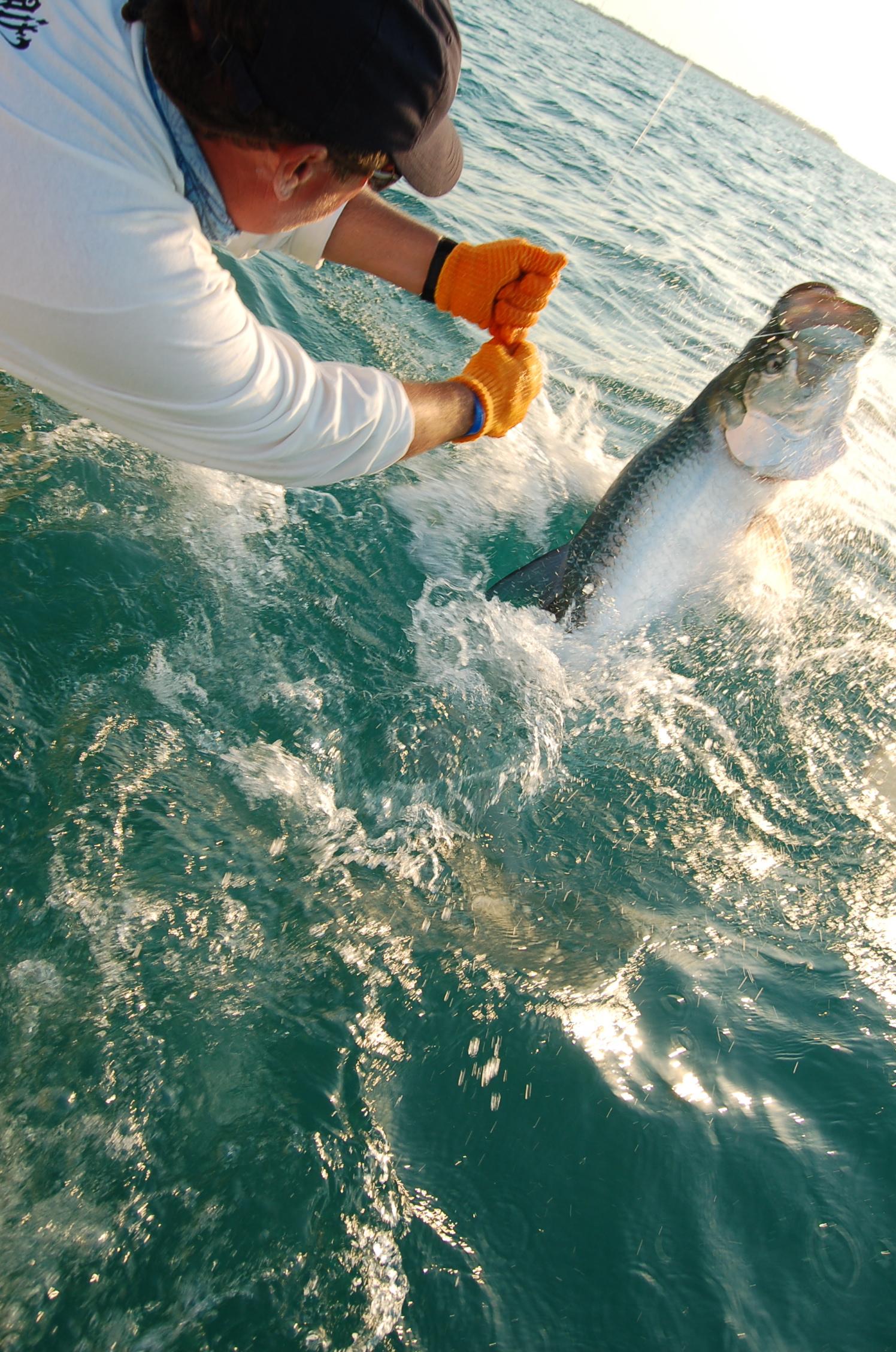 Florida keys fishing charters florida keys fishing charters for Florida keys fishing